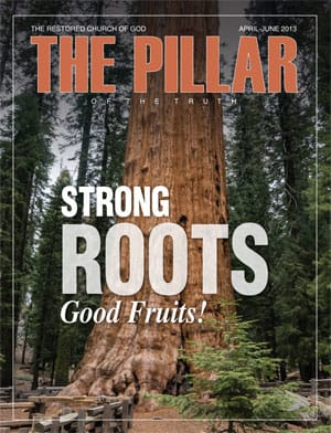 Strong Roots—Good Fruits!