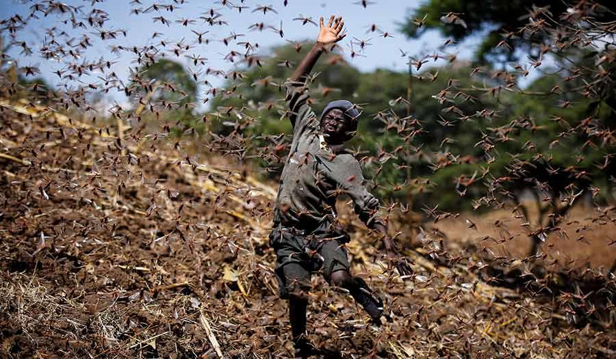 Africa_Locust_Chase-apha-210409.jpg