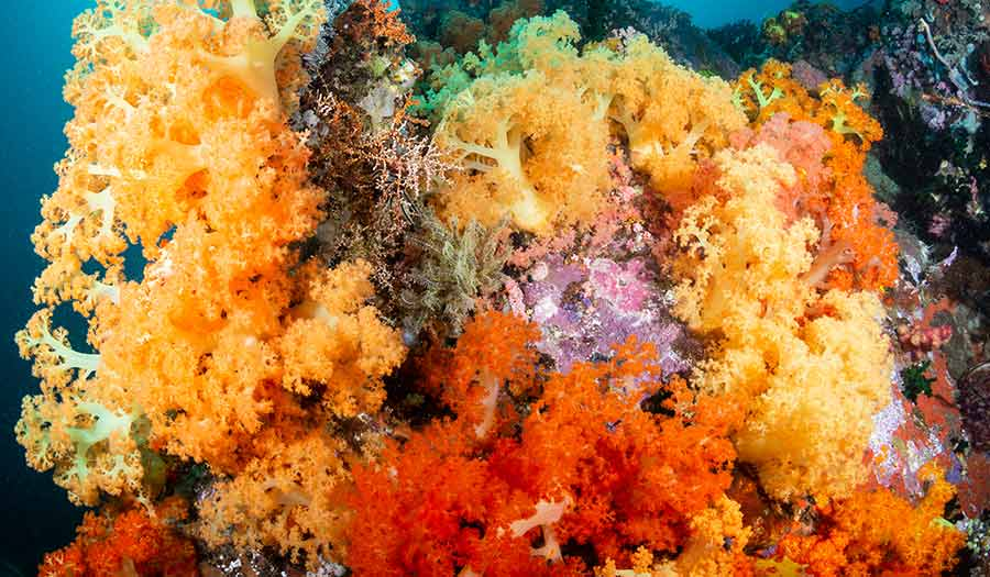 Coral_Reefs_Study-apha-210505.jpg