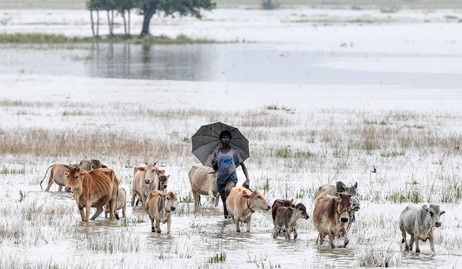 Flooded_Field_Cows-apha-200720.jpg