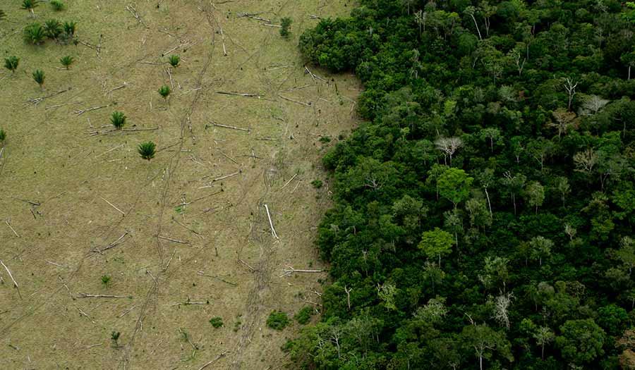 Global_Rainforest_Loss-apha-210405.jpg