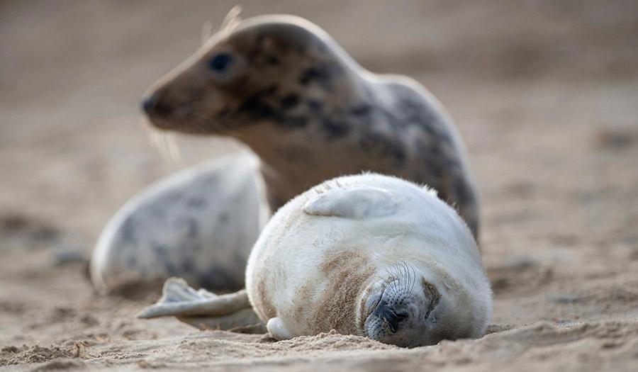 Seal_Baby_Sand-apha-210111.jpg