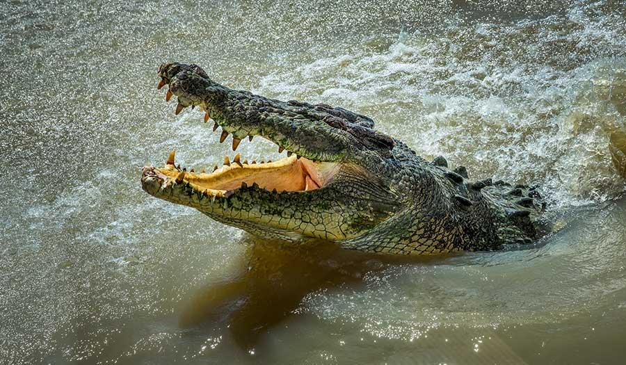 crocodile_australia_river-apha-190208.jpg