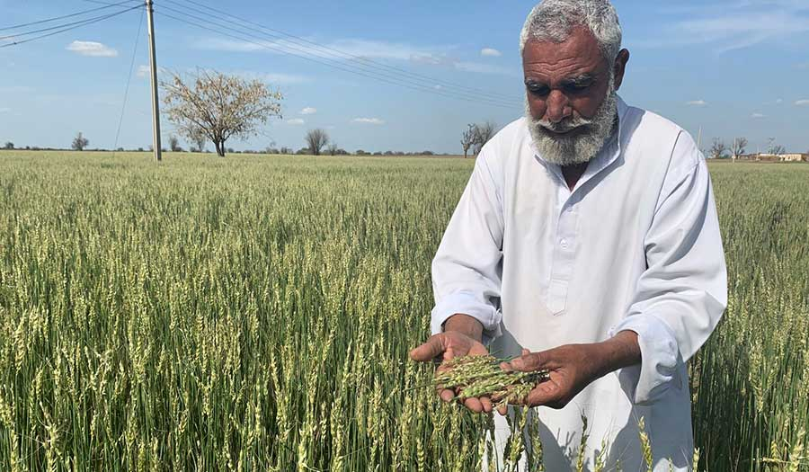 gulmuhammad_wheat_hailstorm-apha-200526.jpg