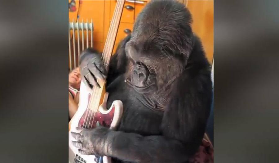 koko_the_gorilla-apha-180621.jpg