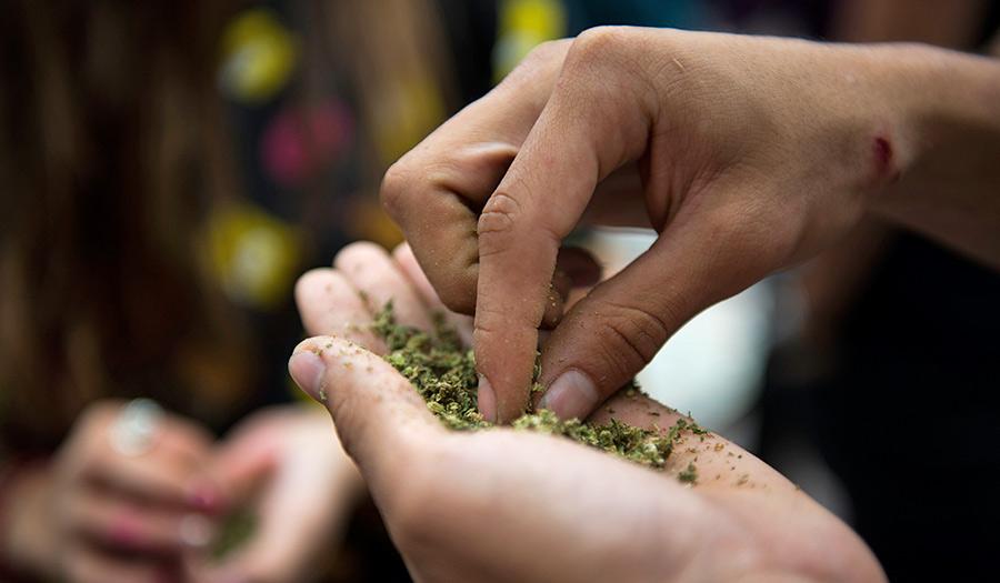 marijuana_in_hand-apha-180817.jpg