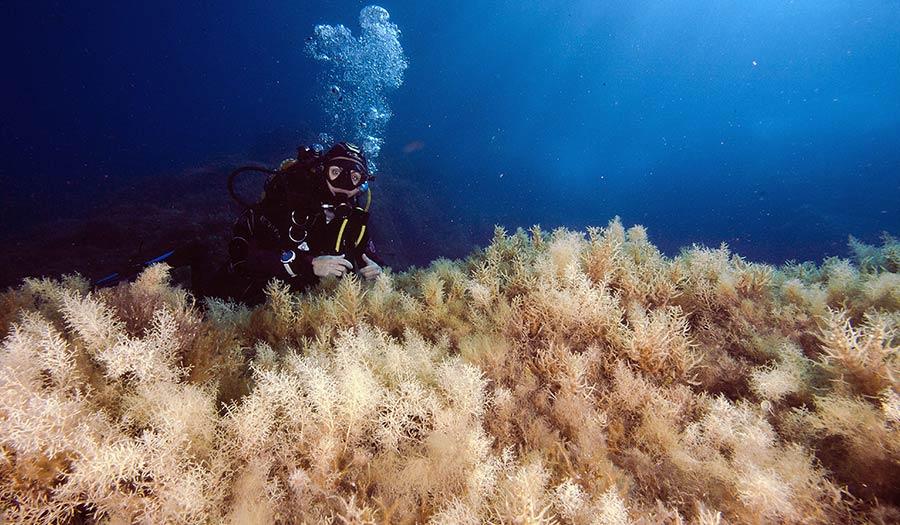 ocean_suffocating_diver-apha-180112.jpg