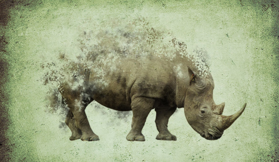 rhino_extinction_collage-apha-180420.jpg