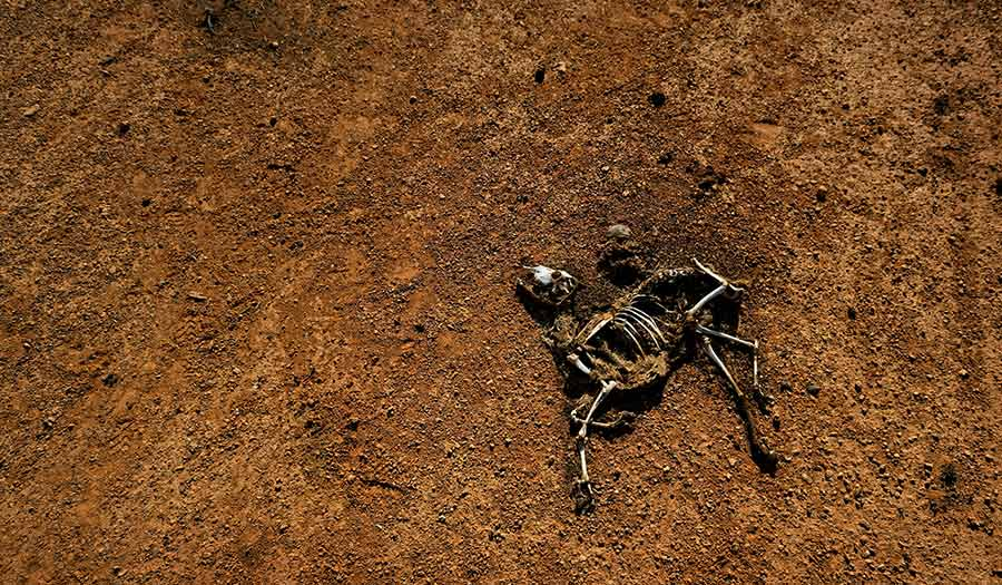 somali_famine_drought-apha-190605.jpg